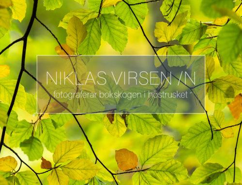 Fotograferar bokskog i höstrusket.