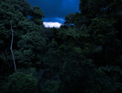 I skuggan av Corona – Så påverkas viltreservaten i världen.