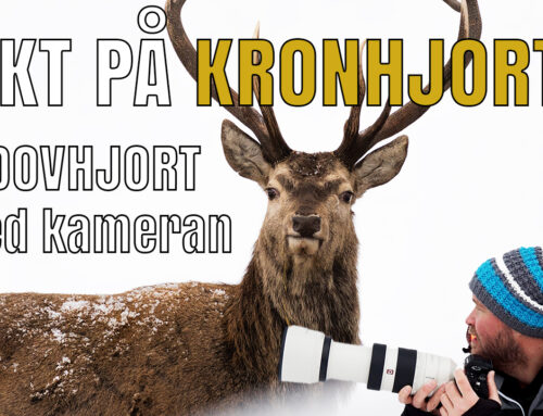 Jakt på kronhjort & dovhjort – med kameran.