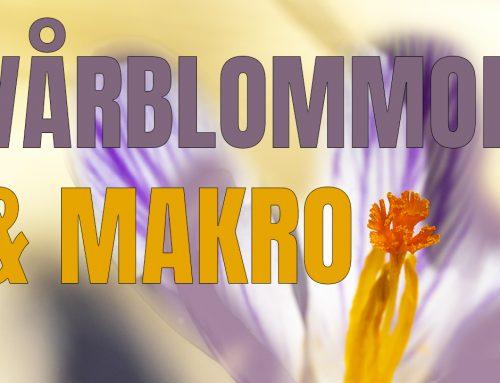 Vårblommor & makro – Flera råd för bättre makrofoto.
