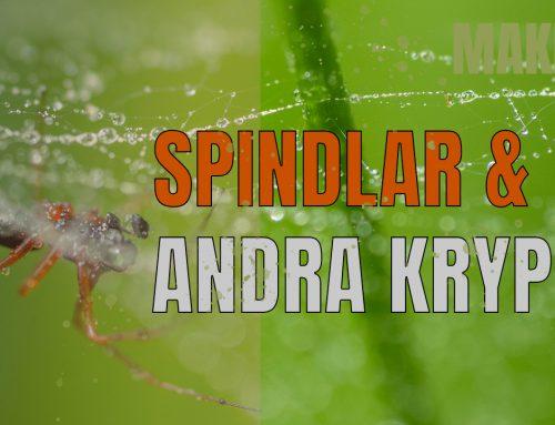 Spindlar & andra kryp  – makrofoto.