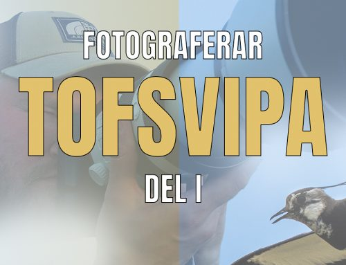 Fotograferar Tofsvipa – DEL I