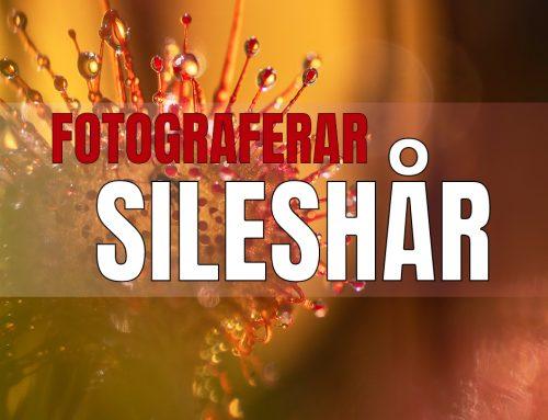 Fotograferar sileshår – kreativt.
