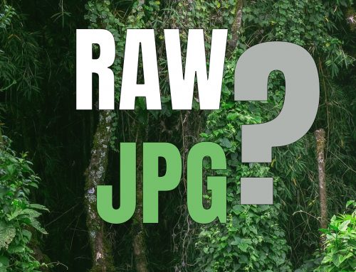 RAW eller JPG – vilket ska du välja? (svaret är inte glasklart!)