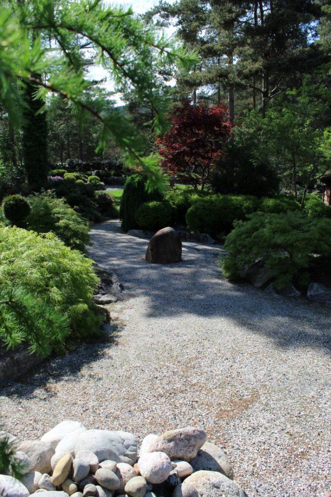 Japanlønn i lekker kontrastfarge i Odden Hage