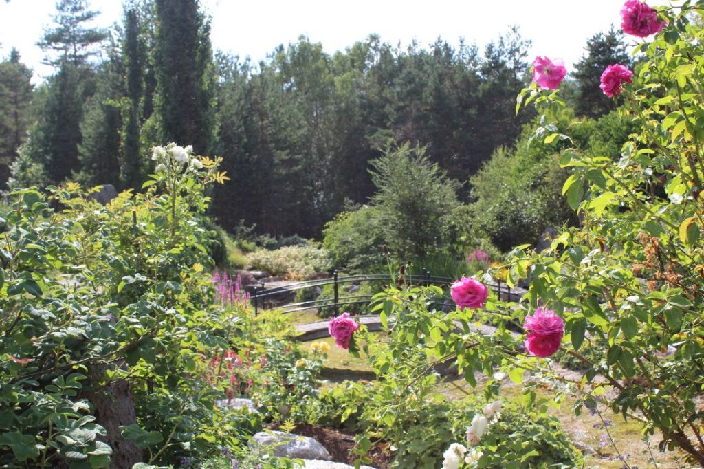 Roser i Odden Hage