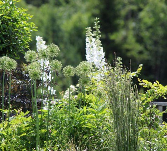 5 nøkler for å skape en helhetlig hage