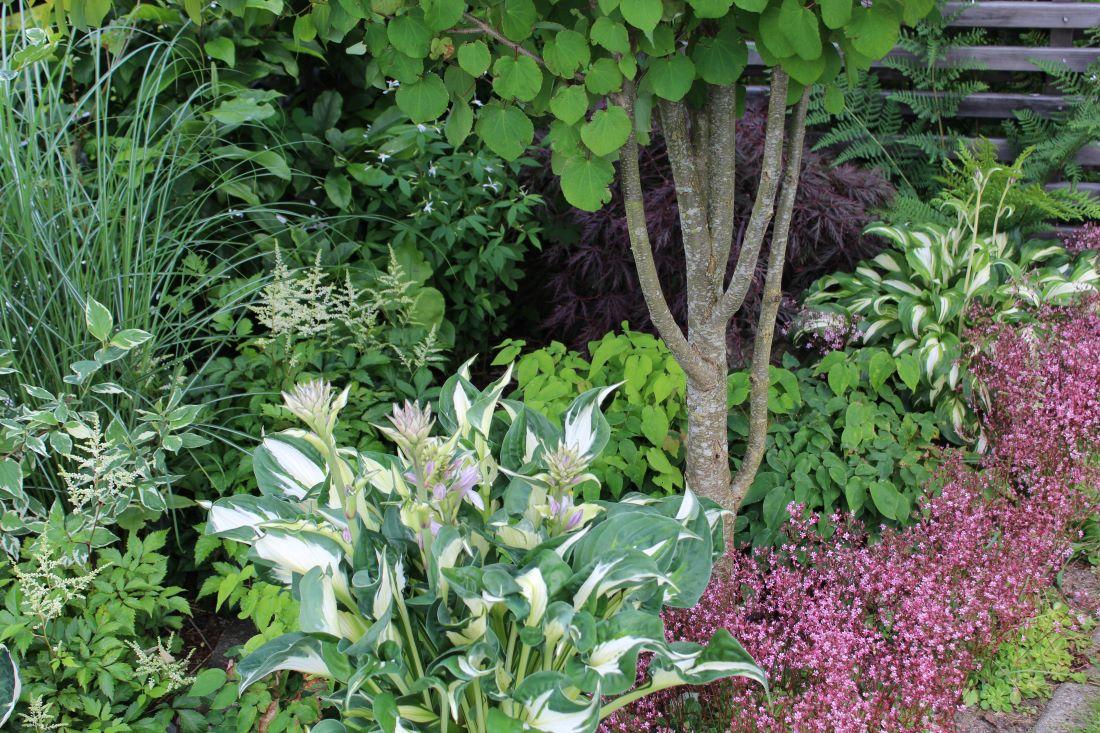 Helhet i hagen, harmoni og variasjon