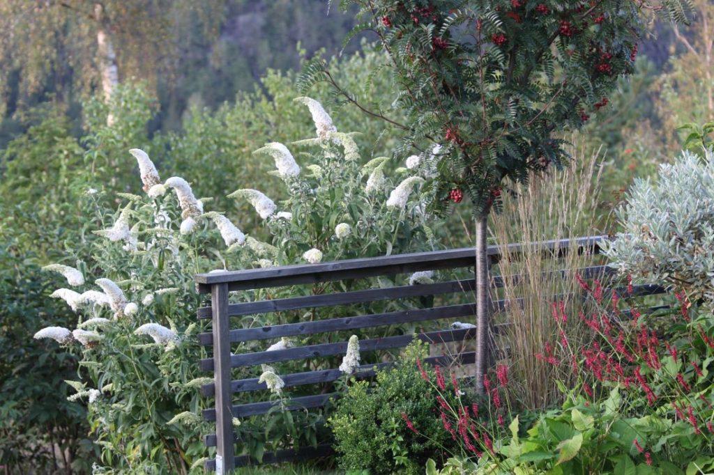 Fryd Hagedesign, Sommerfuglbusk (Buddleja), Rogn (sorbus) og Blodslirekne (Persicaria amplexicaulis)