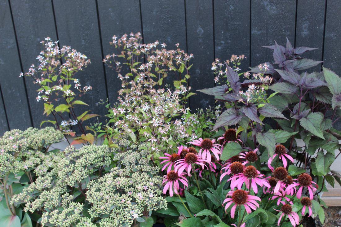 Fryd Hagedesign, 11 nyttige tips til å finne planter