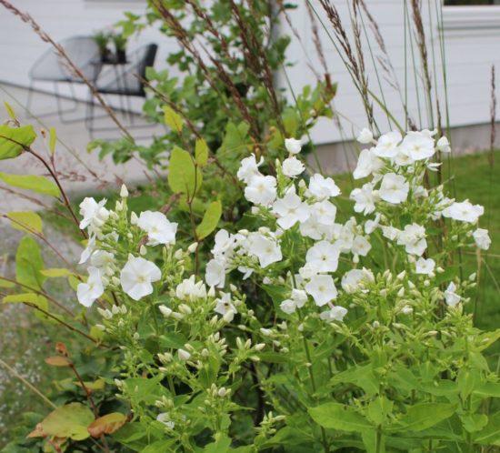 Fordeler med å bruke en hagedesigner