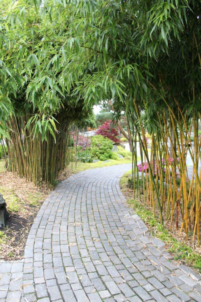 Hekk og hagegang av bambus