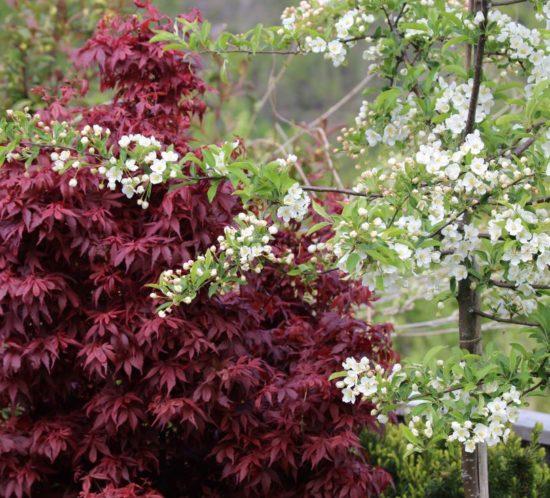 Velg riktige trær til hagen din