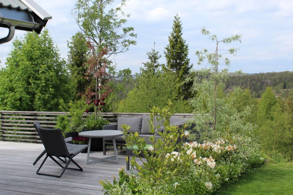 Låneutsikt i hagen med skogen og trær i bakgrunnen