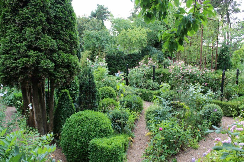 Vintergrønne planter i hagen, her er både tuja, buksbom og barlind