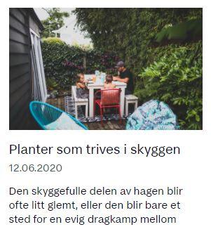 Planter som trives i skyggen, artikkel hos Huseieren med bidrag fra Fryd Hagedesign