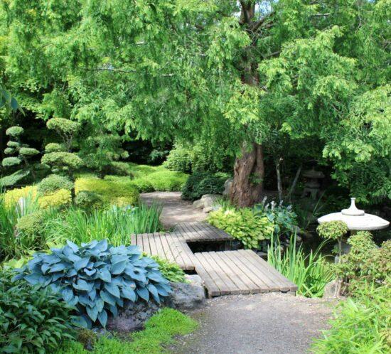 Frodig oase i hagen