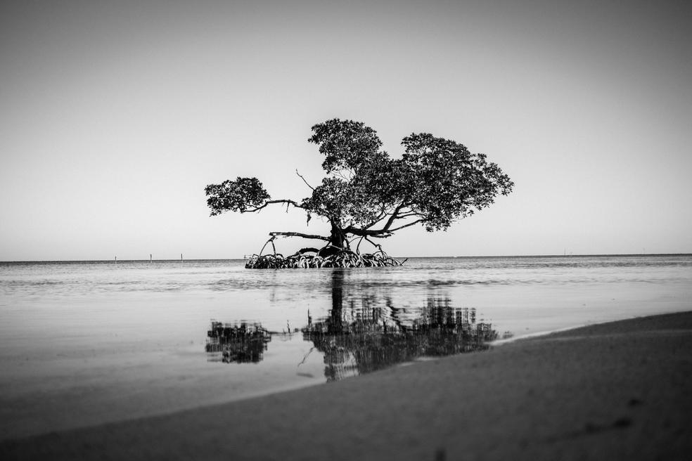 Cayo Jutías Mangroves