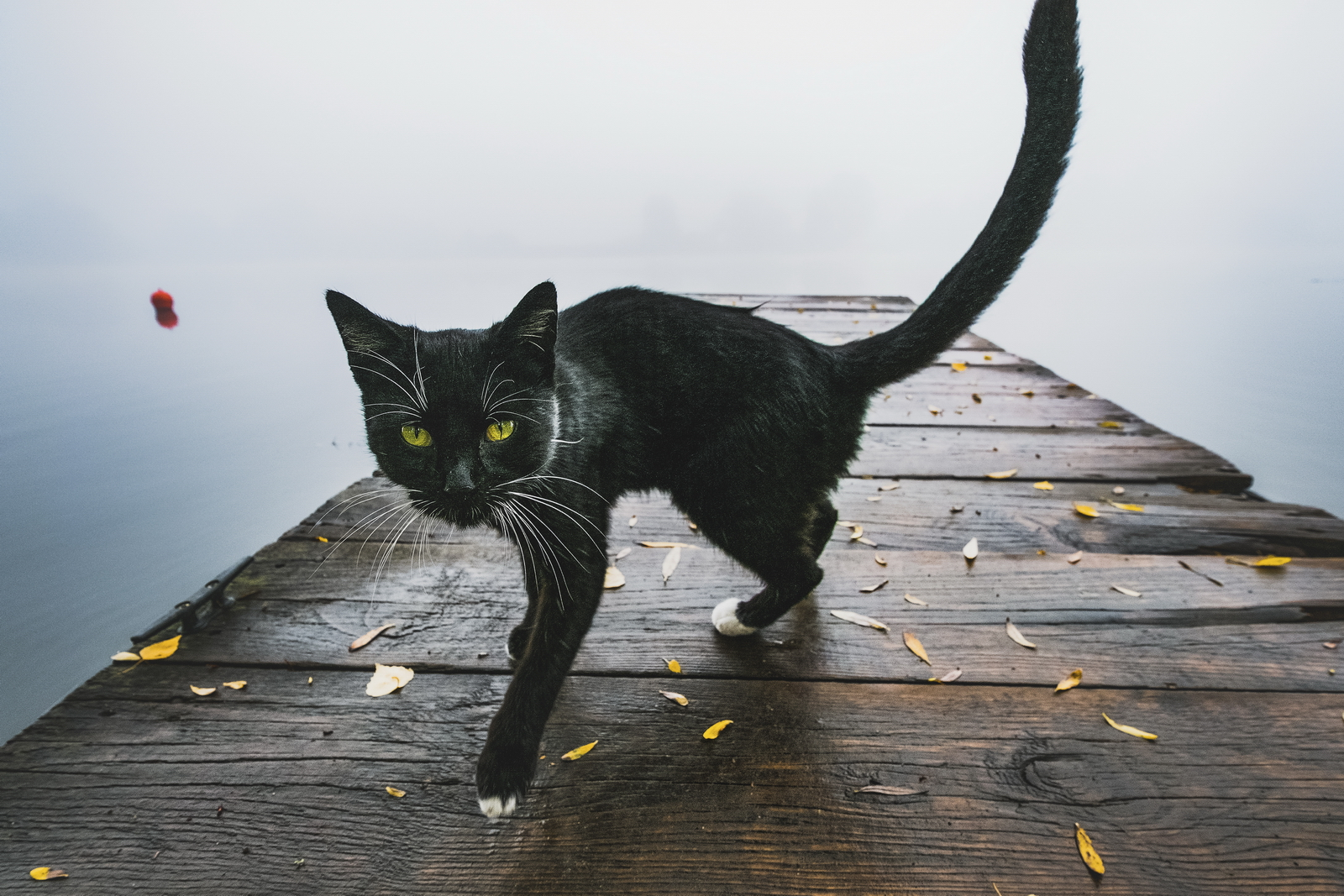 Kitty – In the misty morning on the river Oder in the gallery landscape he visited me a black stranger. Extremely nice and busy, we walked together in the back and to capture Kitty. Fuji XPro-2, XF 10-20, 1/350s, f5.6, ISO 800