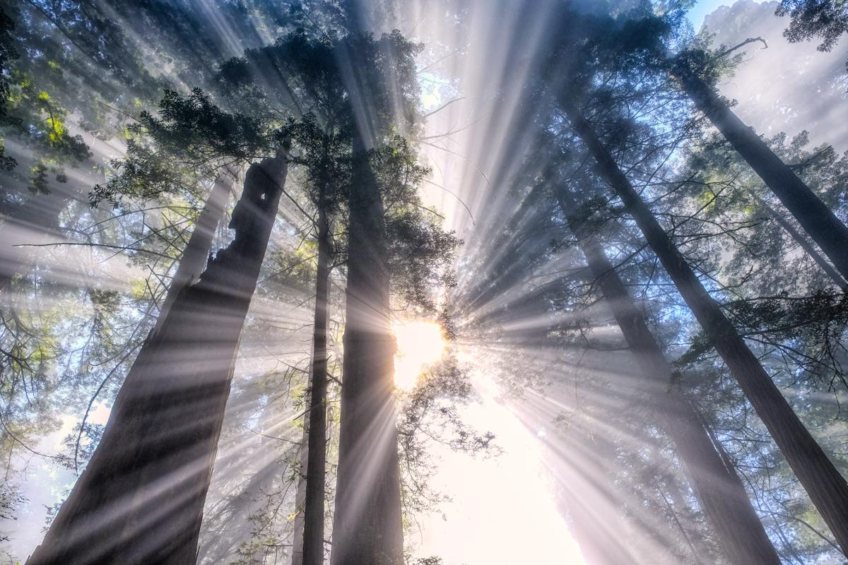 Shazam! - Light & fog creating light rays in the California Redwoods.