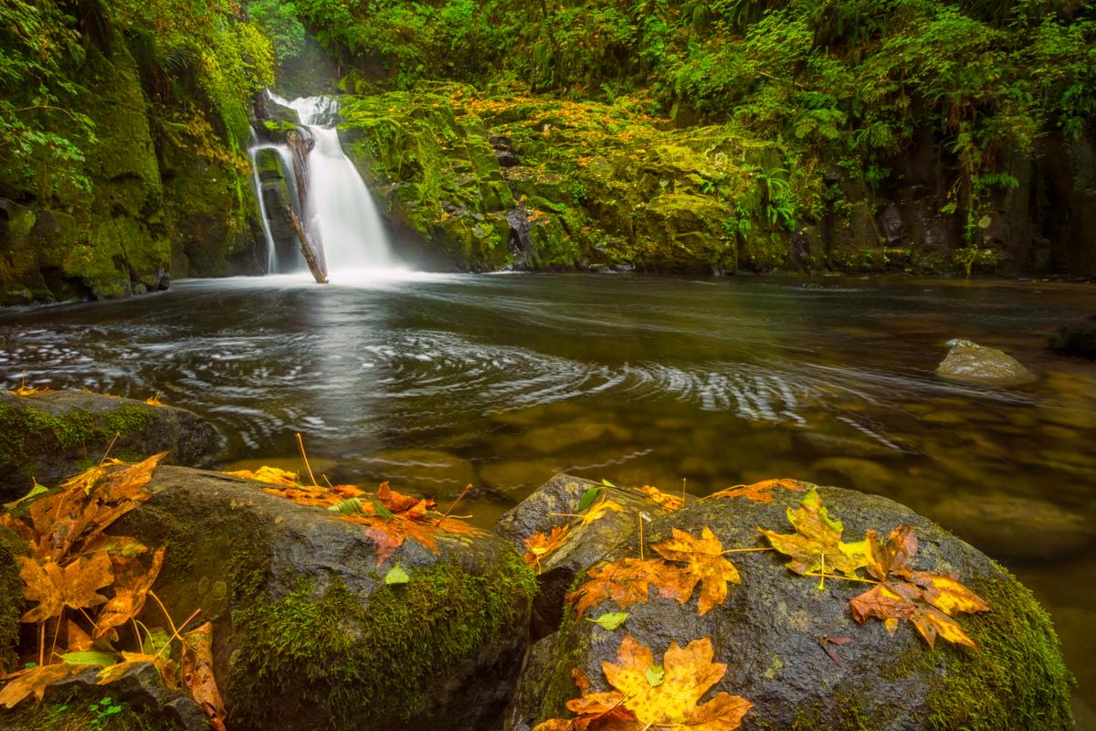 Sweet Creek Falls in Autumn -Sweet Creek Falls waterfall can be found along the Sweet Creek Trail in the Oregon Coast Range.
