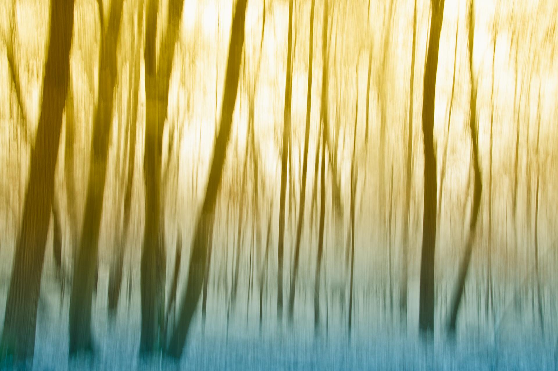 Fotografia creativa di un bosco