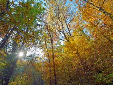 Foto bosco in autunno