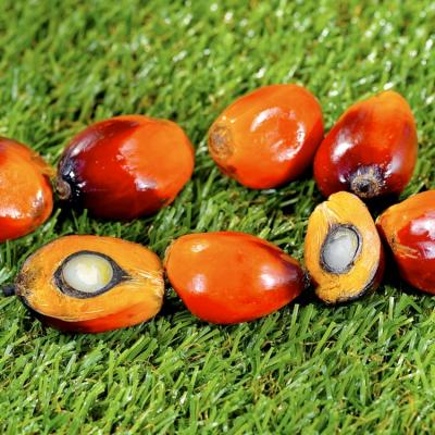 Olio di palma: la maggior parte diventa biocombustibile