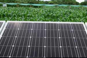 Agrovoltaico: la sinergia tra agricoltura e impianti fotovoltaici