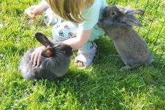 Våre sosiale kaniner