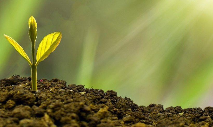 ¿Por qué a veces es difícil para las empresas invertir en medio ambiente?
