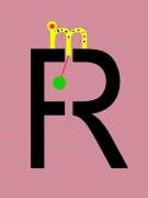 Rho neos (R)