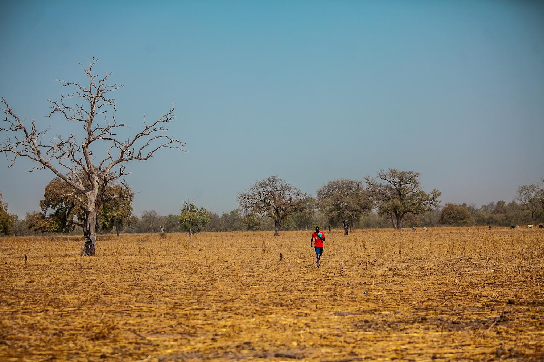 The Cotton Trail Farmers Village