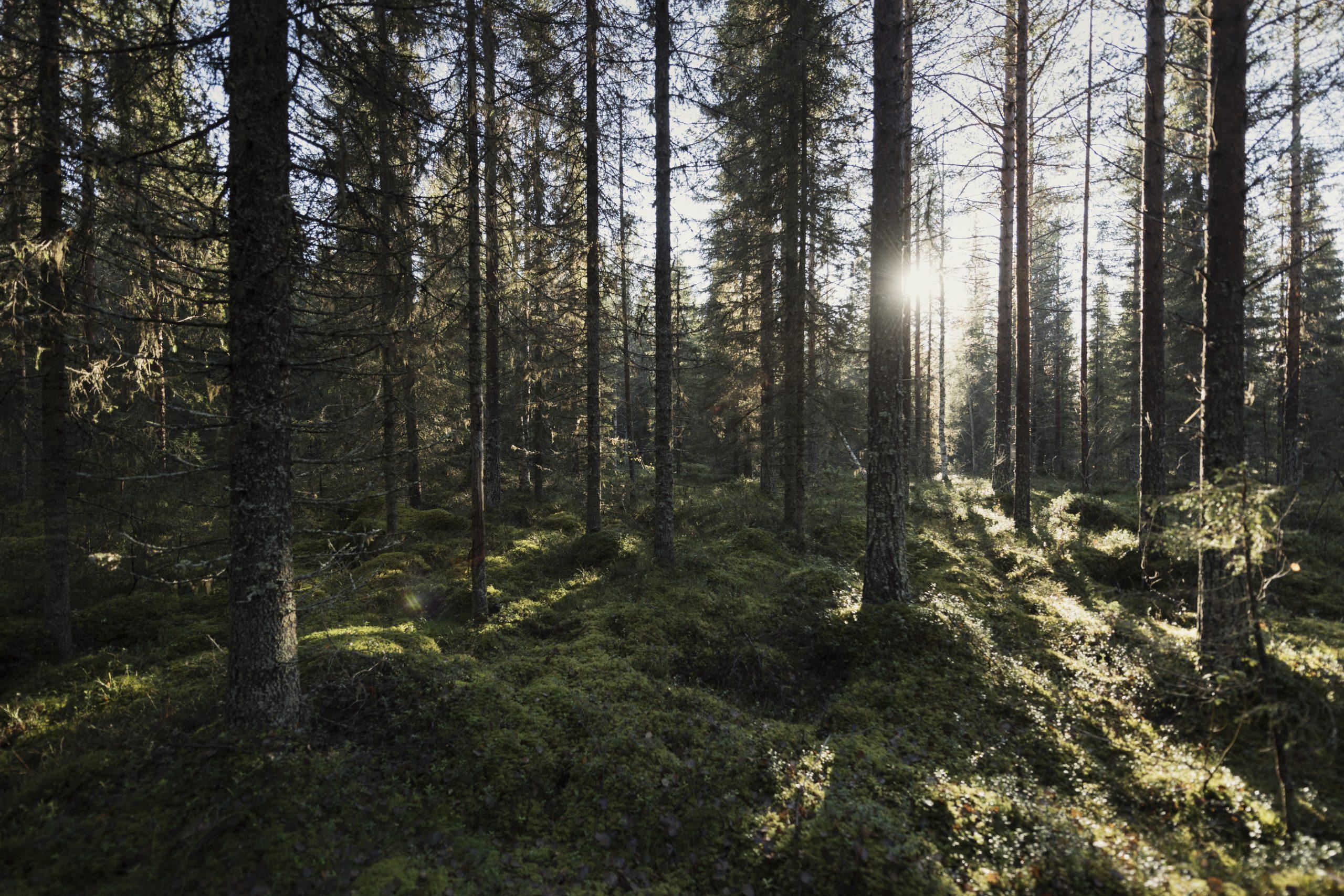 Skog av Christian Åslund