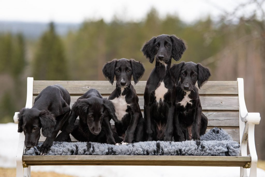 M-litter on bench, photo by Malin Wengdahl