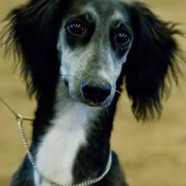 Puppy Abbe