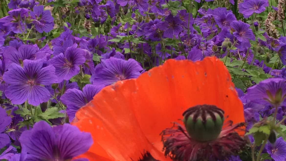 How your garden can help your mental health