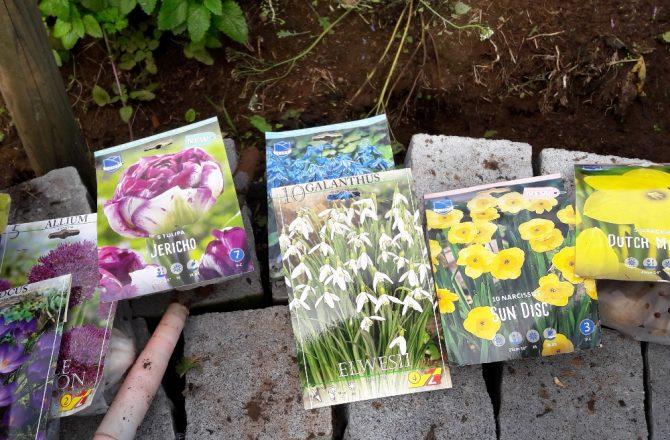 Blumenzwiebeln pflanzen: Ein heikles Spiel