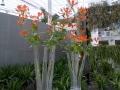 Venlo-20120513-00232