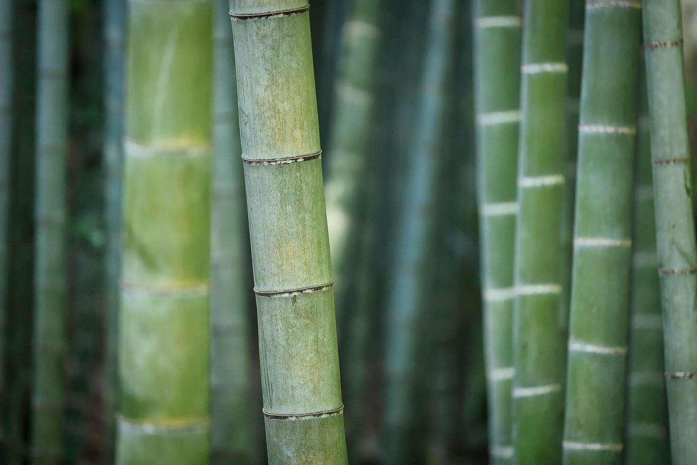bæredygtig bambus