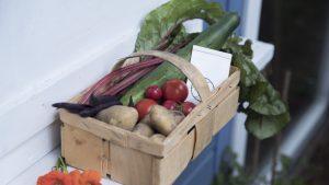 Read more about the article 5 typische Anfängerfehler im Gemüsegarten und wie man sie vermeidet