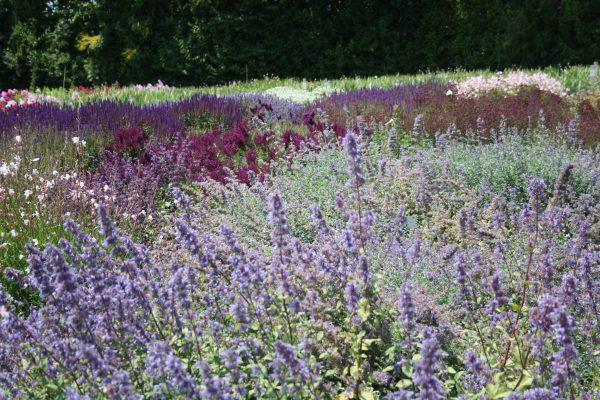 Die schönsten Dauerblüher für einen farbenfrohen Sommergarten