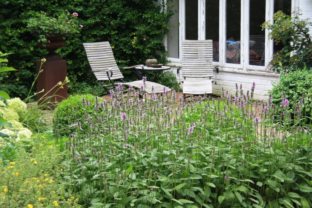 Read more about the article Lazy Gardening – entspannt gärtnern