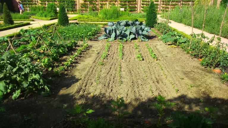 Gemüsegarten Fruchtfolge Fruchtwechsel Mischkultur