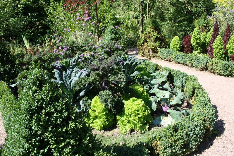 Mischkultur – auf gute Nachbarschaft im Gemüsebeet