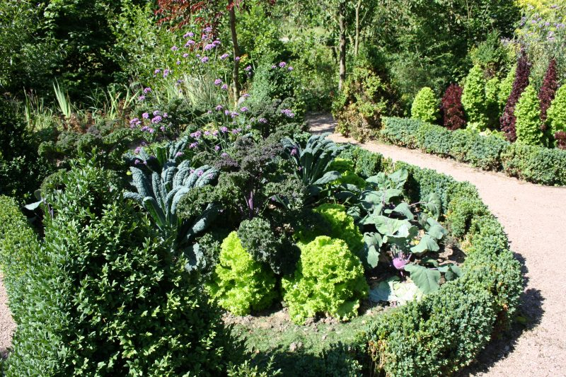 Read more about the article Mischkultur – auf gute Nachbarschaft im Gemüsebeet