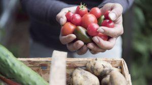 Read more about the article Tomaten selber ziehen – die besten Tipps und Tricks