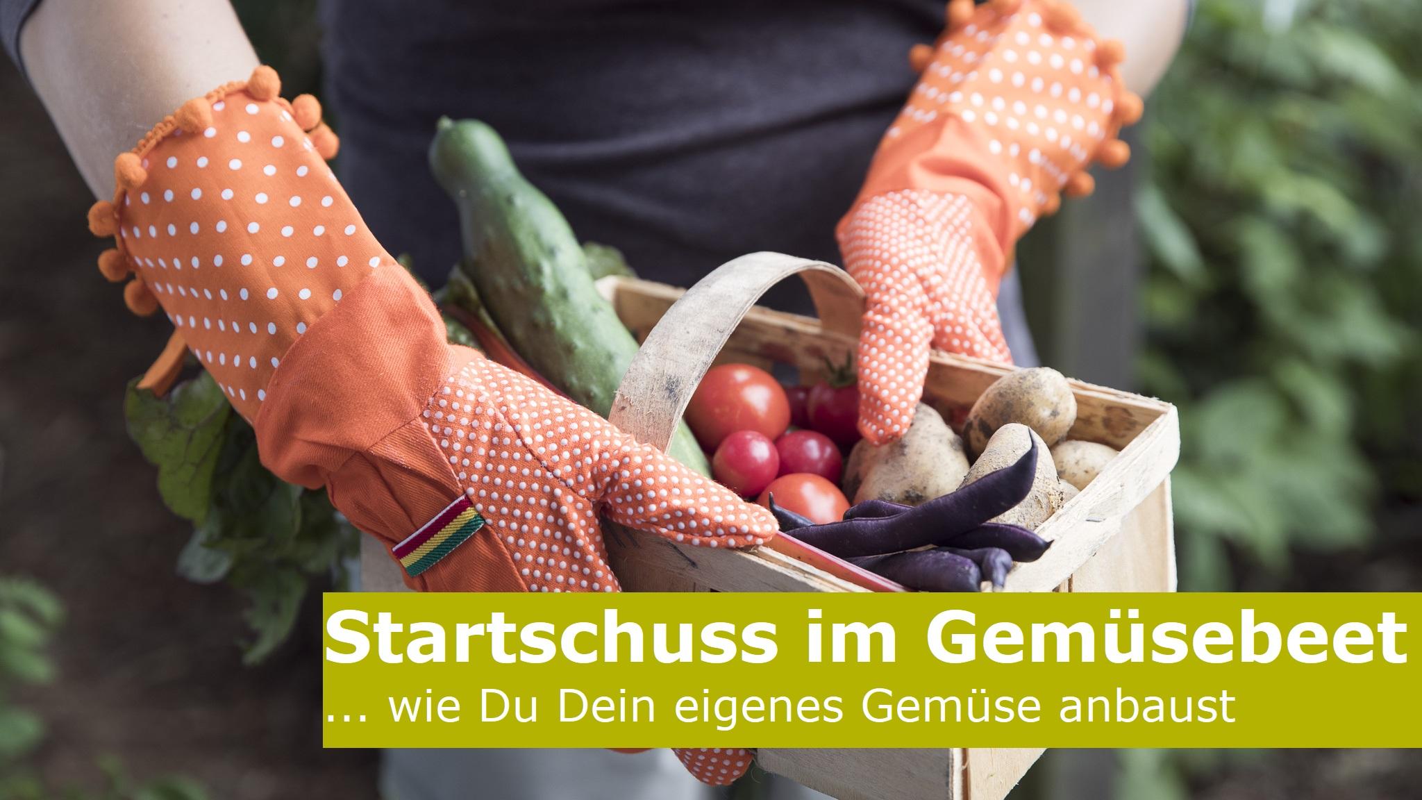 Read more about the article Startschuss im Gemüsebeet
