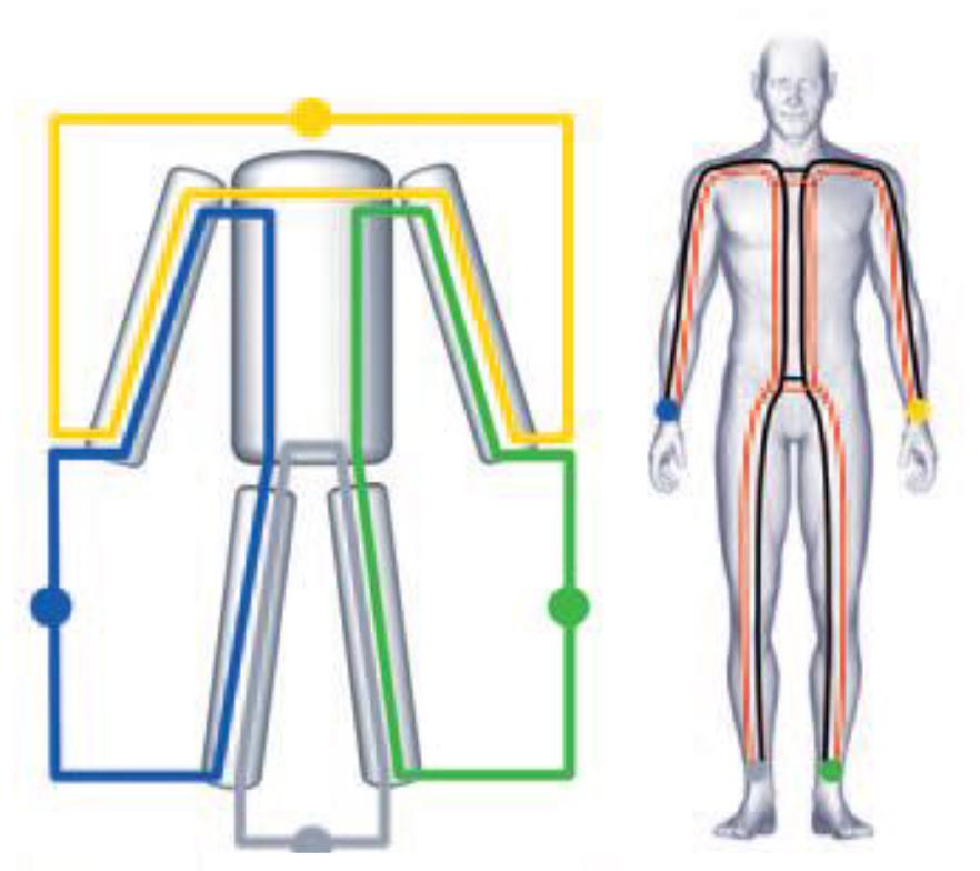 BIACORPUS-overzicht van het lichaam-Gezondheidstools