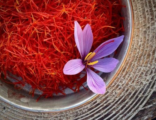 Spice of the month: Saffron